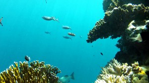 Koralrev og Slow TV